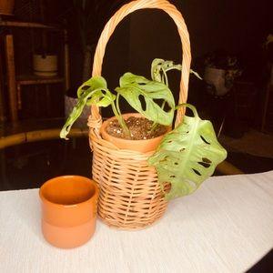 boho wicker plant basket